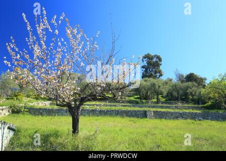 Alpes de Haute Provence, 04, PACA, France - Stock Image