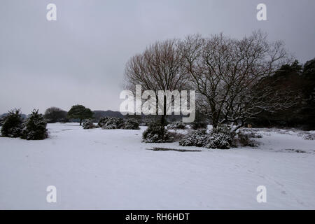New Forest, Hampshire. 1st Feb 2019. UK Weather:  Beautiful snowy scenes in the New Forest.  Credit: pcpexclusive/Alamy Live News - Stock Image