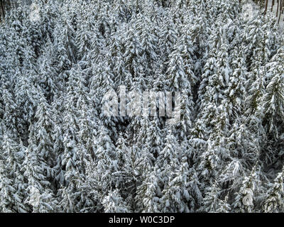Winter landscape with snow covered forest - Stock Image