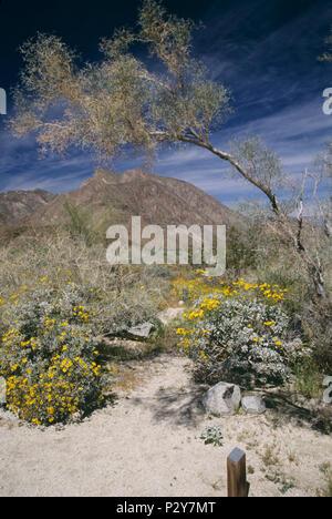 Anza-Borrego Desert State Park, CA,  980322_102 - Stock Image