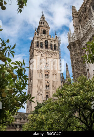 View of Giralda bell tower, seen from the courtyard, Seville Cathedral, a UNESCO world heritage site, Seville, Andalucia, Spain - Stock Image