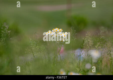 summer flower spring floral focus - Stock Image