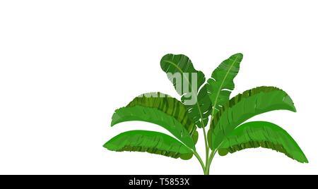 Bright green leaves of banana palm. Bush. Tropical theme. for print, image or postcard. illustration - Stock Image