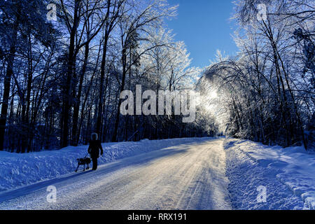 A woman walking her dog along a lane with ice covered trees after freezing rain in Quebec, Canada - Stock Image