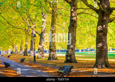Autumn scene, an avenue lined with trees in Green Park, London - Stock Image