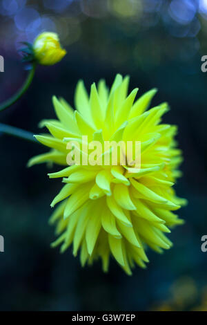 Strange yellow flower - Stock Image