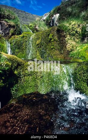 Abhainn Coire Mhic Nobuil, the stream that descends Coir nan Laogh below Tom na Gruagaich, one of the summits of Beinn Alligin in Torridon, Scotland - Stock Image