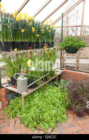 Winter in the  Green house at Rosemoor - Stock Image