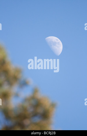 Moon in the morning - Stock Image