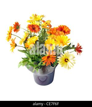 Fresh cut Pot Marigold (Calendula officinalis) arranged in a vase. - Stock Image