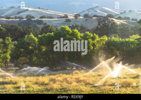 USA, California, Parkfield, V6 Ranch sprinklers watering a grassy field on a cattle ranch in the early morning - Stock Image