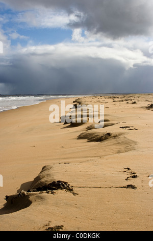 Dornoch Beach with sand piled at the back of the beach following a winter storm - Stock Image