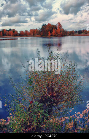 Trees on the shore of the lake in autumn - Stock Image