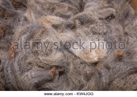 Pile of high quality merino wool - Stock Image