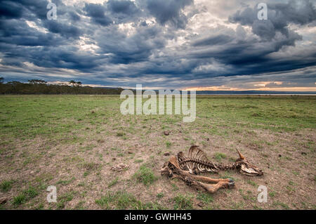 African landscape with dramatic sky and animal skeleton with horns. - Stock Image