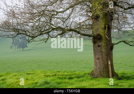 A field of lush green pasture in the Shropshire countryside. - Stock Image