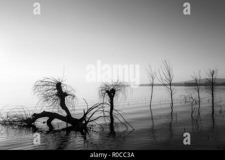 Beautiful sunset at Trasimeno lake (Umbria), with perfectly still water and skeletal trees. - Stock Image