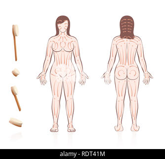 Body skin brushing. Dry skin brushing with directions of brush strokes. Health and beauty treatment for skincare and massage. - Stock Image