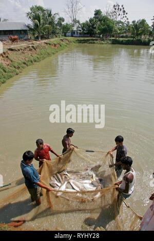 BANGLADESH Fish caught at a Fish hatchery employing scientific methods at Haluaghat, Mymensingh region photo by Sean Sprague - Stock Image