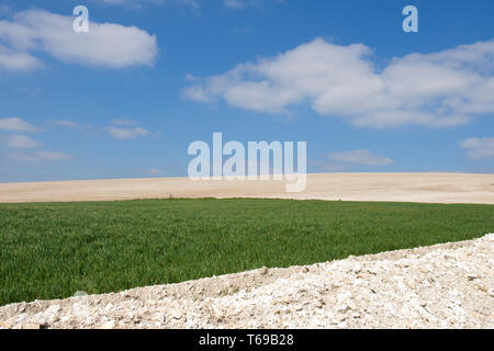 chalky fields and crops on South Downs near St. Roche's Hill, the Trundle, Chichester, Sussex, UK, April. South Downs National Park. - Stock Image