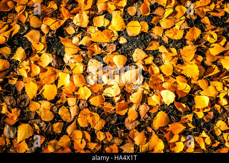 Yellow Autumn Leaves on Ground - Stock Image