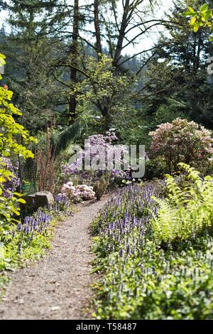 A trail lined with flowers in springtime in Hendricks park in Eugene, Oregon, USA. - Stock Image