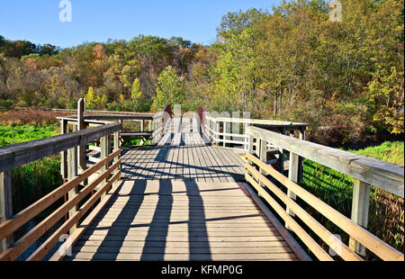 Grindstone Marsh Trail through marshes and forest in Royal Botanical Gardens in Burlington, Ontario, Canada on sunny - Stock Image
