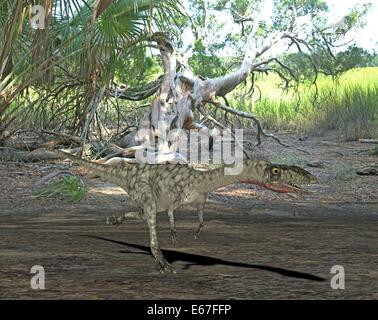 Dinosaurier Coelophysis / dinosaur Coelophysis - Stock Image