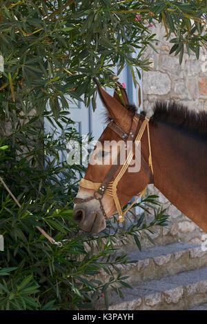 Beautiful horse at Hydra island - Stock Image