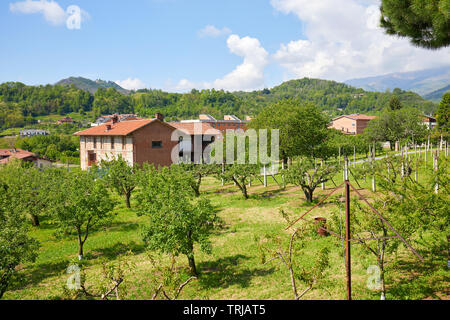 Orchard and red bricks rural house in a sunny summer day, Italy - Stock Image