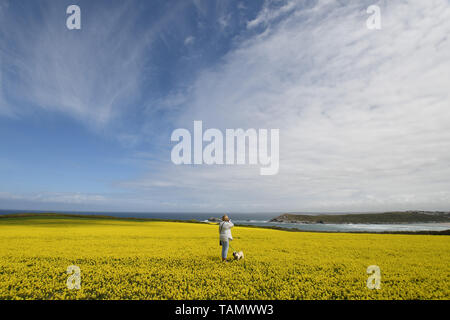 West Pentire, Crantock, Cornwall, UK. 27th May 2019. UK Weather. Breezy but sunny on the north Cornwall coast at west Pentire for bank holiday monday. Credit SImon Maycock / Alamy Live News. - Stock Image