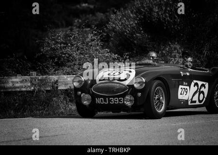 PESARO COLLE SAN BARTOLO , ITALY - MAY 17 - 2018 : AUSTIN HEALEY 100 S 1953 on an old racing car in rally Mille Miglia 2018 the famous italian histori - Stock Image