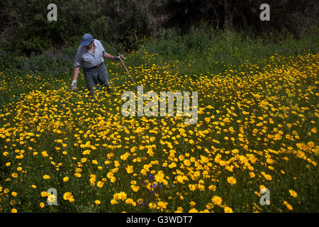 Organic farmer Diego Sanchez walks in his organic farm in Prado del Rey, Cadiz, Andalusia, Spain, July 16, 2013. - Stock Image