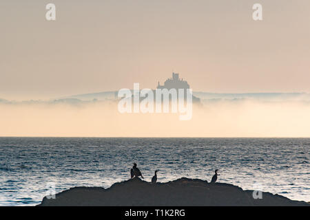 Penzance, Cornwall, UK. 27th Mar, 2019. UK Weather. Shortly after sunrise sea mist formed on the surface of the sea at Mounts Bay, shrouding the base of St Michaels mount. In the foreground cormorants warming themselves in the early morning sunshine Credit: Simon Maycock/Alamy Live News - Stock Image