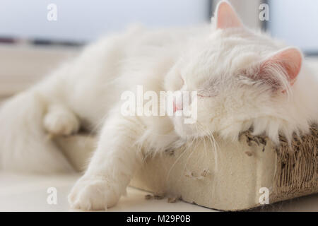 Chilled out cat taking a nap on his favourite spot by the window... a relaxing scene - Stock Image