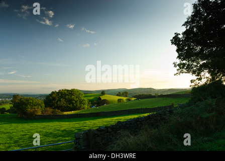 Late raking sunlight striking typically gently rolling hills dotted with sheep and trees with large blue sky in Cumbria. - Stock Image