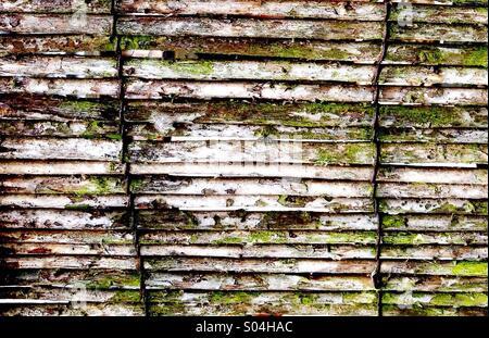 Weathered Bamboo Fence - Stock Image