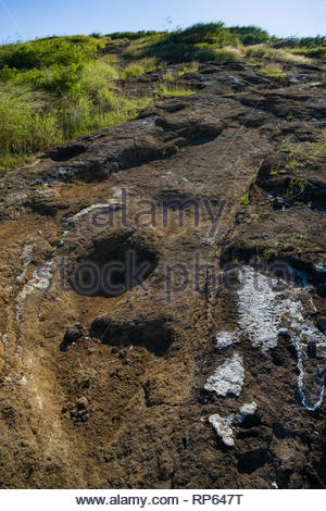 Rugged rocky path in Ihi'ihilauakea Crater, Koko Head, Koko Head District Park, Hawaii Kai, Oahu, Hawaii, USA - Stock Image