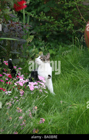 Cat in garden looking at insect - Stock Image