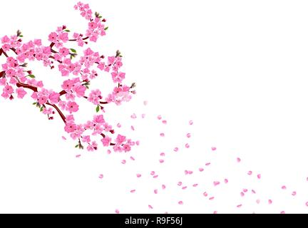 Sakura. Branches with pink flowers, leaves and cherry buds. Petals fly in the wind. isolated on white background. illustration - Stock Image