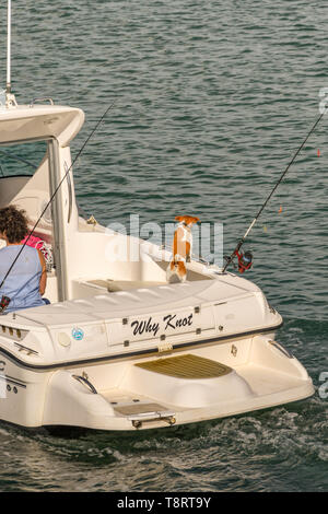 SAUNDERSFOOT, PEMBROKESHIRE, WALES - AUGUST 2018: Small motor boat leaving the harbour in Saundersfoot. Fishing rods are attached to the boat - Stock Image