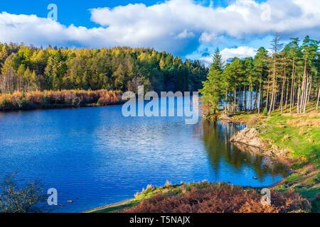 The Tarns, Tarn Hows near Coniston, Lake District National Park, Cumbria, England, United Kingdom, Europe. - Stock Image
