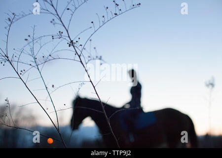Woman riding horse against sky - Stock Image