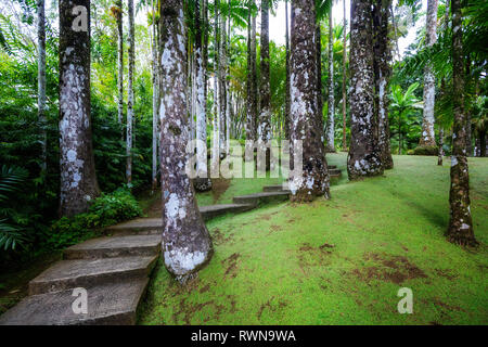 Fort-de-France, Martinique - January 15, 2018: Tropical Balata garden. The Balata is a botanical garden located on the Route de Balata about 10 km out - Stock Image