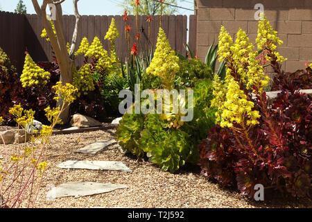 Drought resistant plants - Stock Image