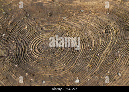 Cross section of tree trunk with growth rings. - Stock Image