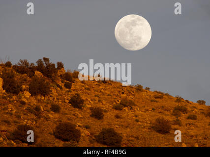 Beautiful moon rises above ridge top glowing red in sunset light on Mt. Lemmon Scenic Byway at Babad Do'Ag Overlook. - Stock Image
