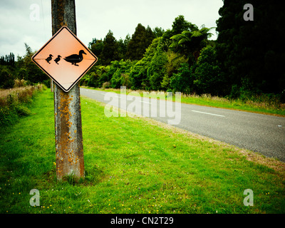 Beware mother duck and ducklings, road sign, New Zealand. - Stock Image