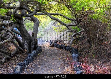 Path or trail  leading into Isabela Island's Tortoise Breeding Center (Centro de Crianza Arnaldo Tupiza). Galapagos, Ecuador - Stock Image