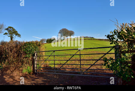 Devon countryside view with rolling green hills, trees view through farm gate, near Cadbury, Bickleigh, UK - Stock Image